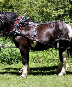 spotted farm harness